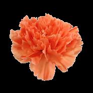 エルメスオレンジ