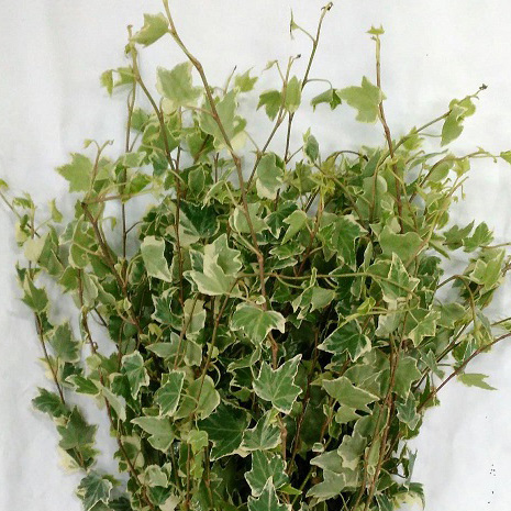 ivy-resize