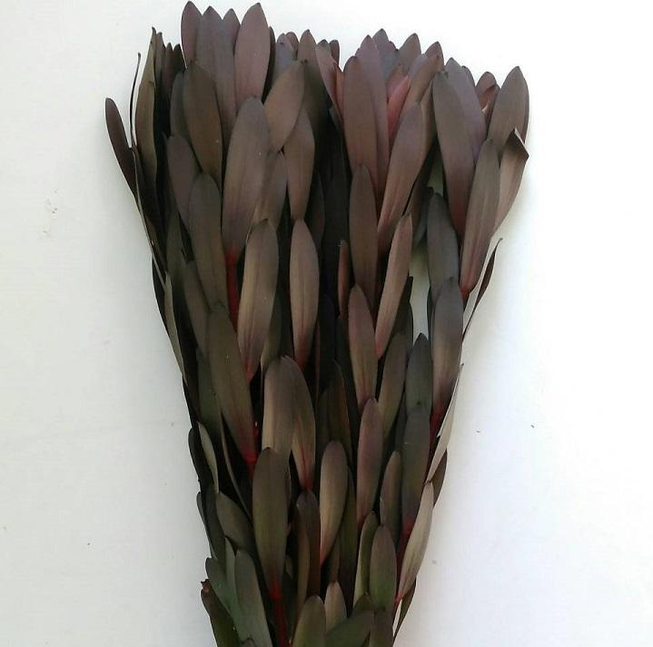 ryuuka
